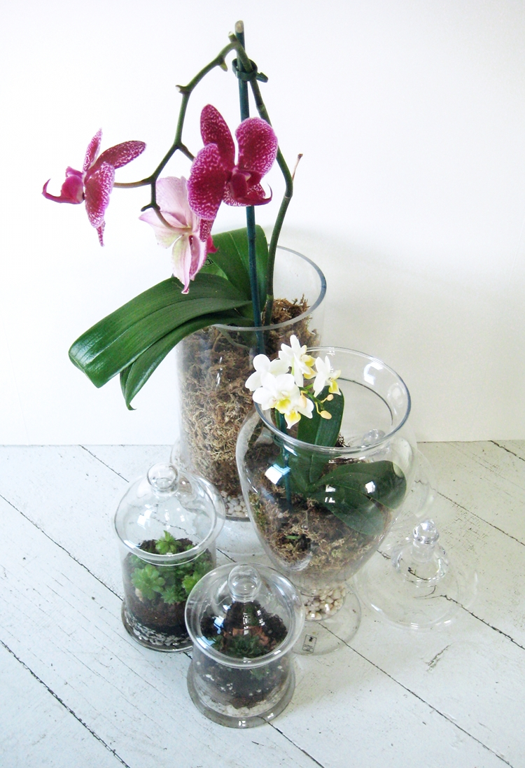 Orchid terrariums how did you make this luxe diy orchid terrariums reviewsmspy