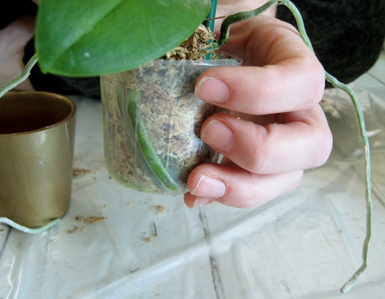 orchid terrariums