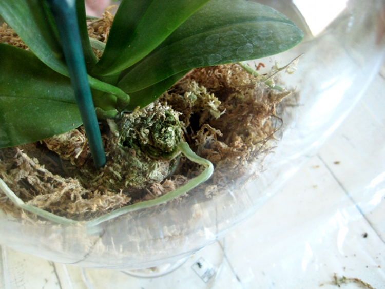 Orchid Terrariums How Did You Make This Luxe Diy